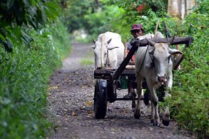 Aspek Demografi Desa Kopandakan II