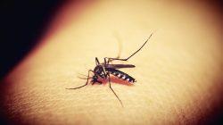 Ilustrasi gigitan nyamuk. (pixabay.com)