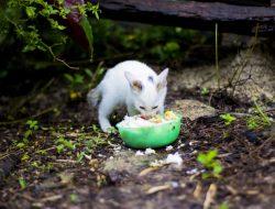 Apakah Makanan Kucing Boleh Dimakan Manusia?